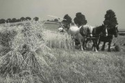 inf-9-375-27-cutting-oats-near-poppleford