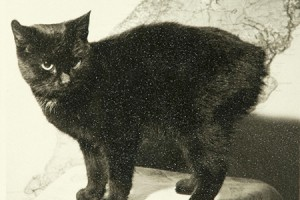 A photograph of Peta, the Home Office cat